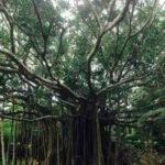 沖縄やんばる 家族旅行・ファミリー向けおすすめ観光スポット&宿泊ホテル4選!