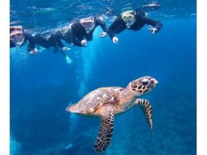 シギラビーチのウミガメ