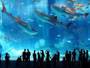 美ら海水族館チケット付きプラン