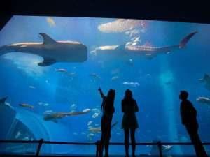 沖縄美ら海水族館入場券付きプラン
