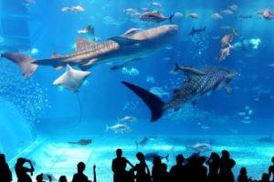 沖縄新婚旅行でおすすめの観光スポット美ら海水族館