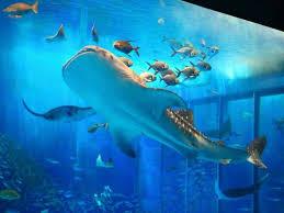 沖縄のおすすめ観光スポット美ら海水族館